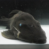 ブルーアイプレコ 29㎝ ¥46800(税込)のサムネイル